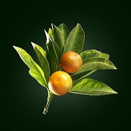 Sladký pomeranč aktivní látka | René Furterer