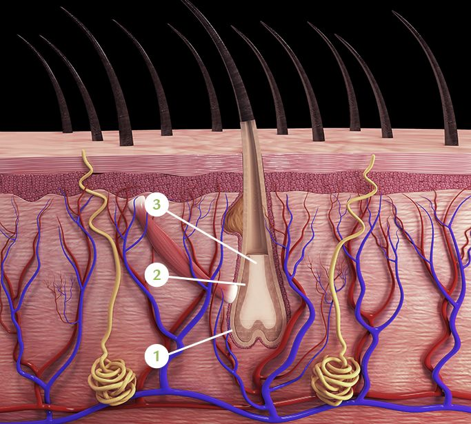 LEARN TO BETTER UNDERSTAND YOUR SCALP AND HAIR