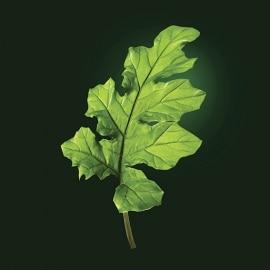 Actief bestanddeel acanthus | René Furterer