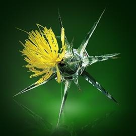 Actief bestanddeel van saffloer | René Furterer