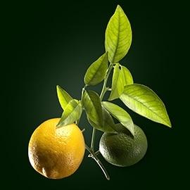 Principio attivo di limone | René Furterer