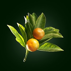 Principio activo del naranjo | René Furterer