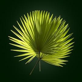 Principio attivo palma | René Furterer