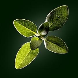 Sage active ingredient | René Furterer