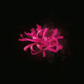 Actieve bestanddeel van Hamamelis | René Furterer